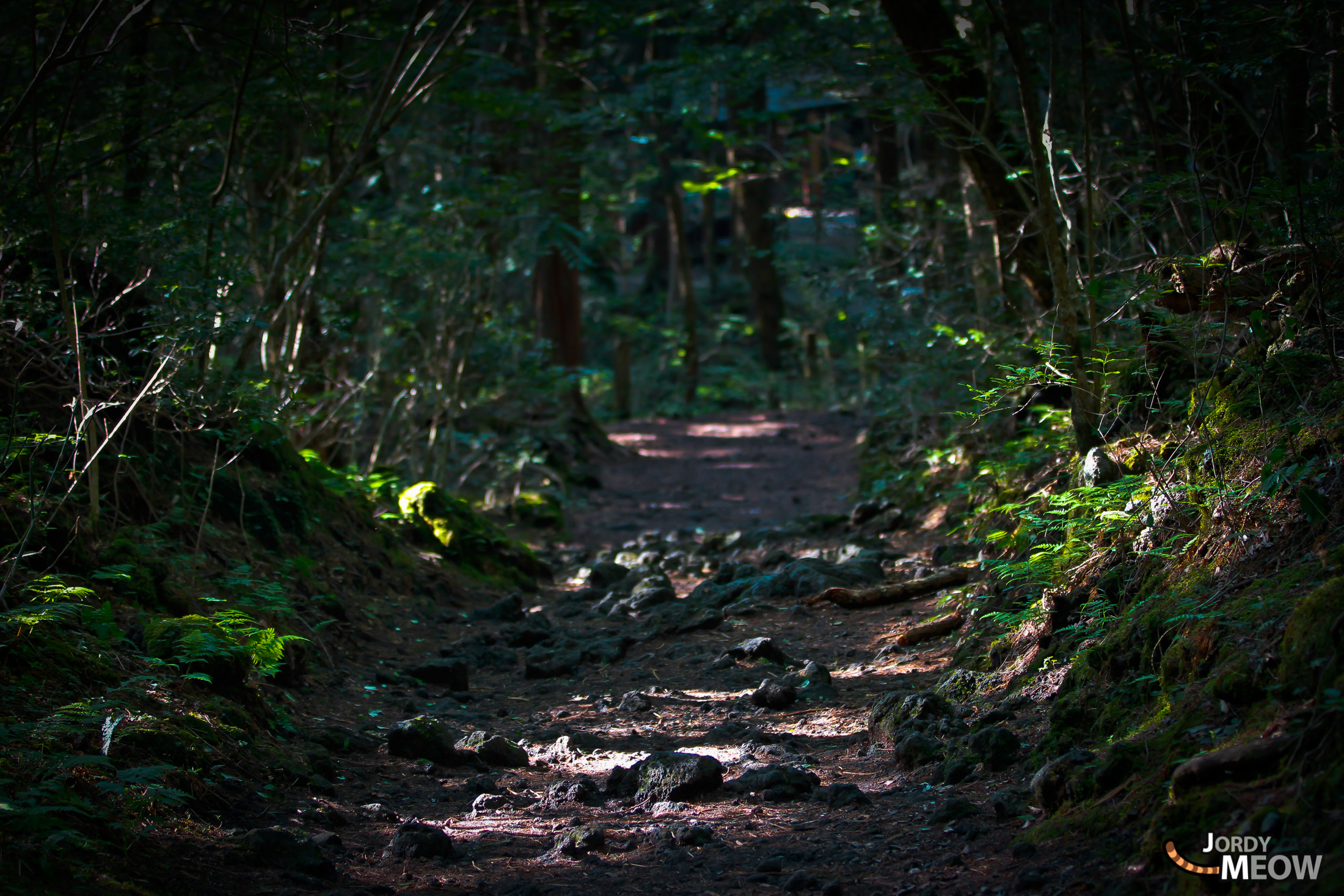 aokigahara, chubu, forest, japan, japanese, natural, nature, yamanashi