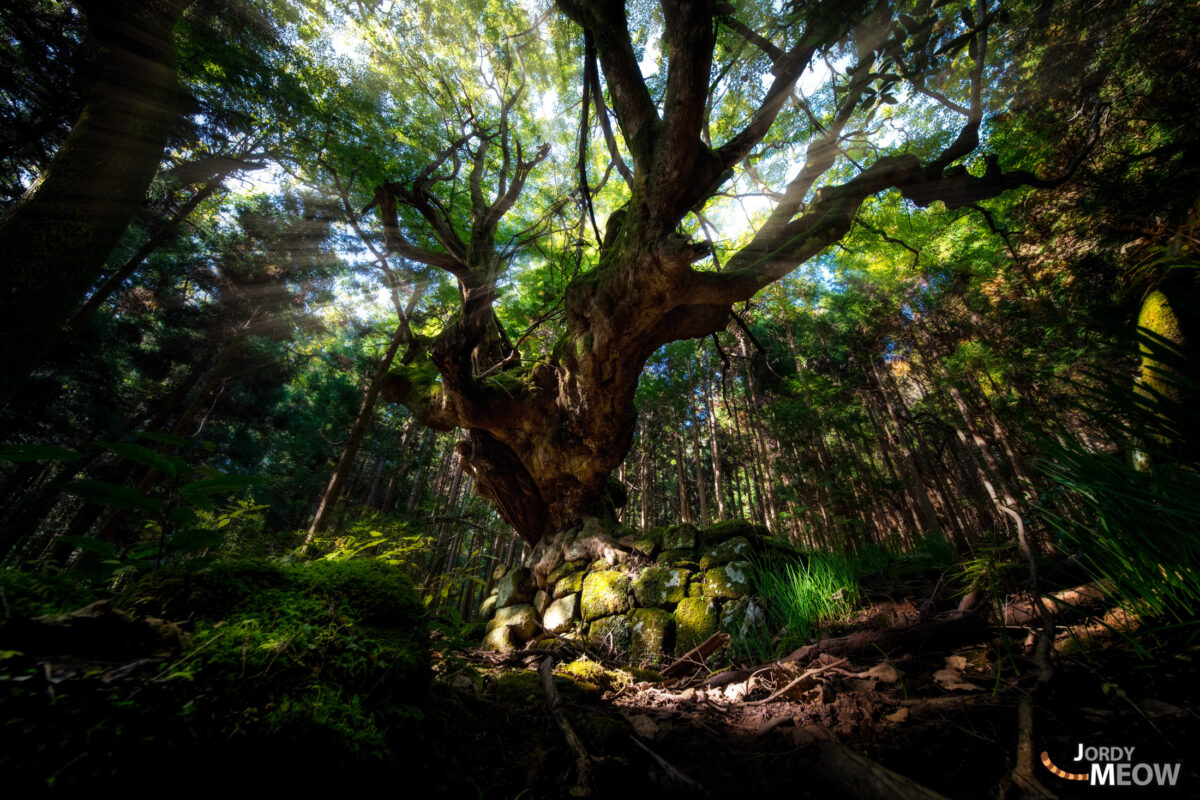 asia, chiba, forest, japan, japanese, kanto, natural, nature, people, tree