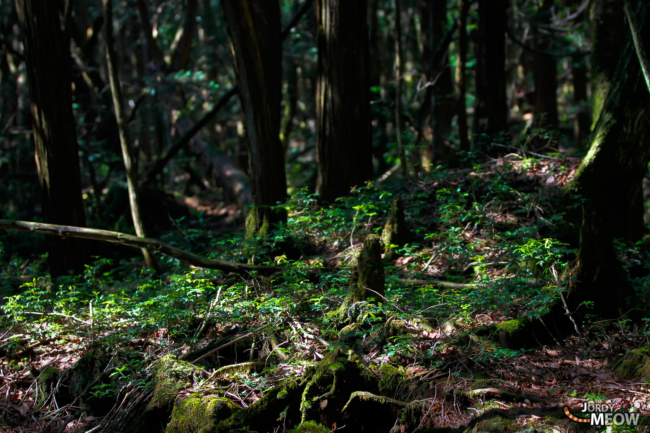 aokigahara, chubu, forest, japan, japanese, natural, nature, yamanashi