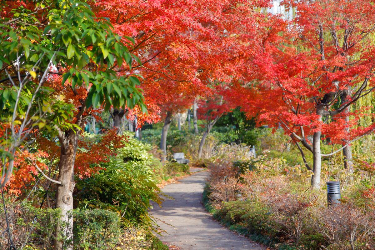 Autumn Leaves - Midtumn Walk