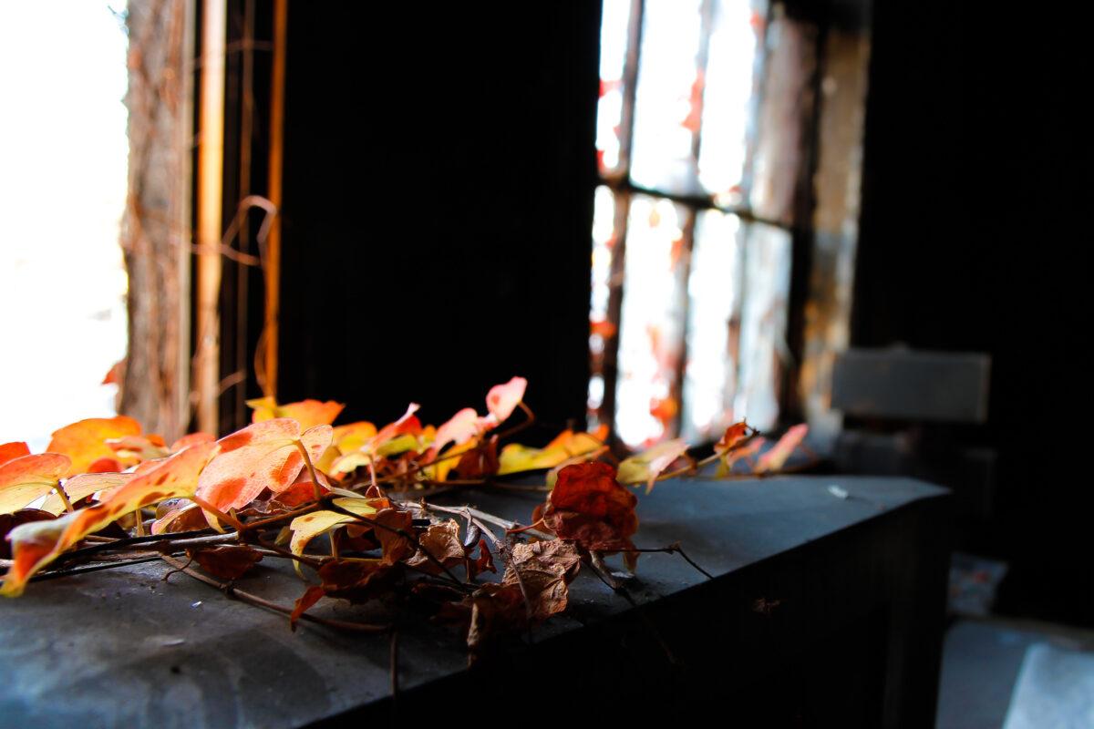 Autumn Leaves - Ruin