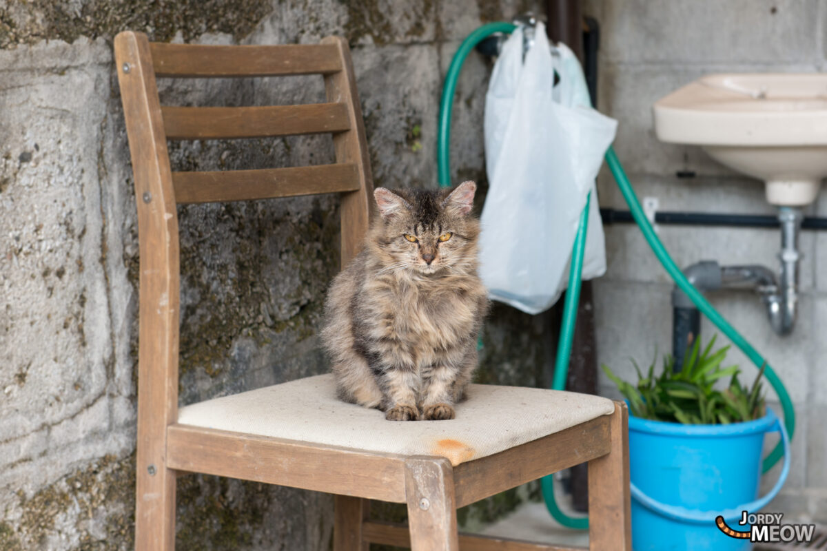 Cat in Zamami Village