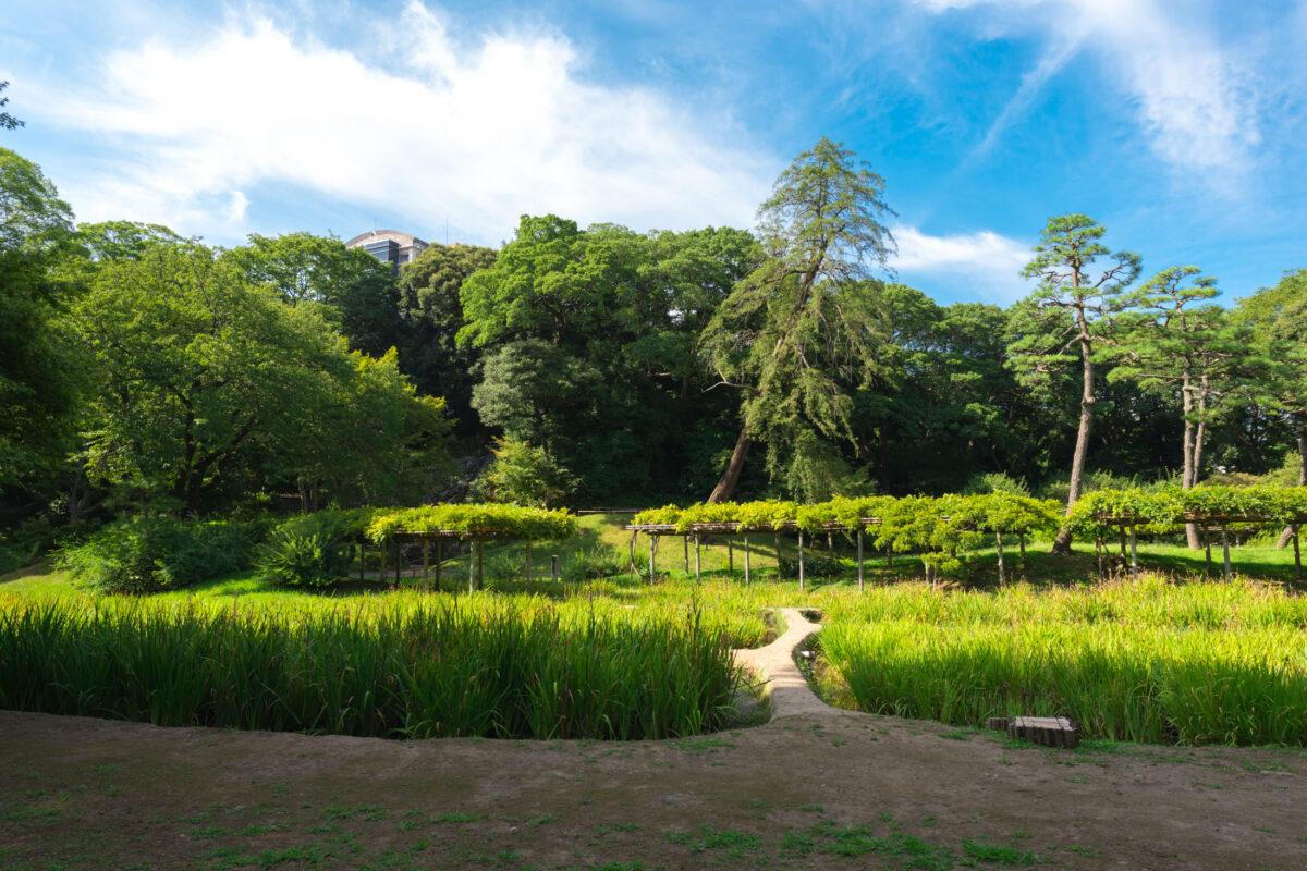 Korakuen Rice Fields
