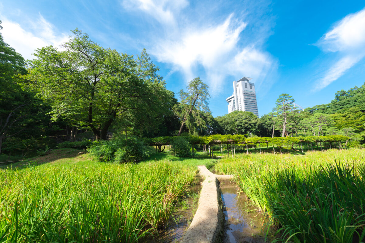 Through the Korakuen Ricefields