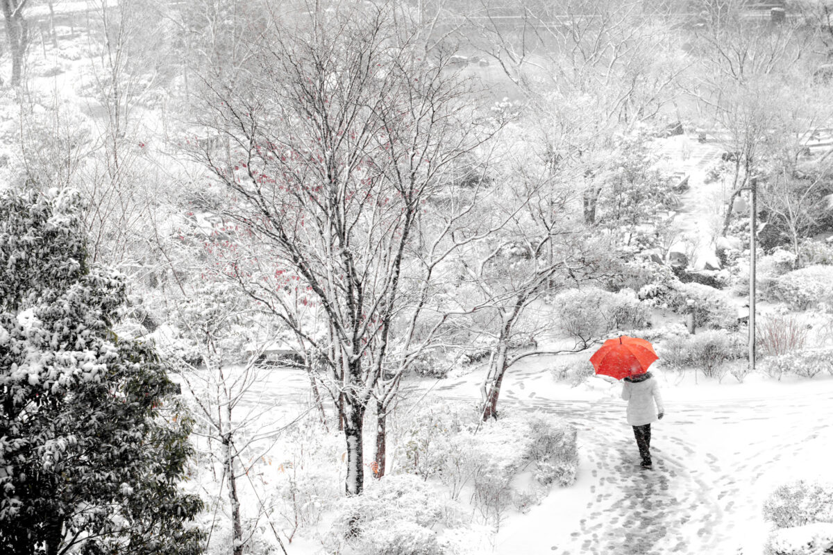 Red Umbrella in the Snow