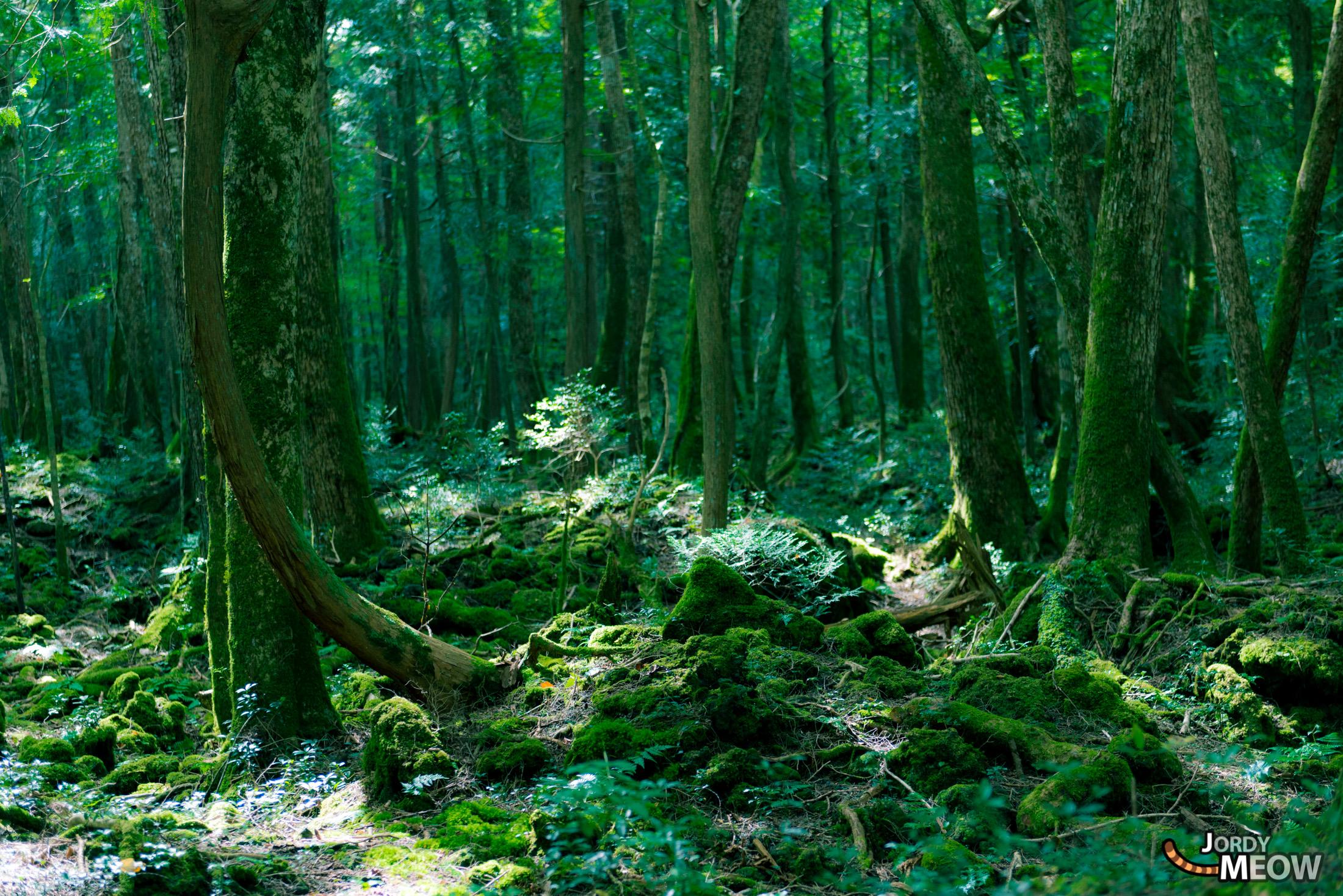 autumn, chubu, forest, japan, japanese, natural, nature, yamanashi