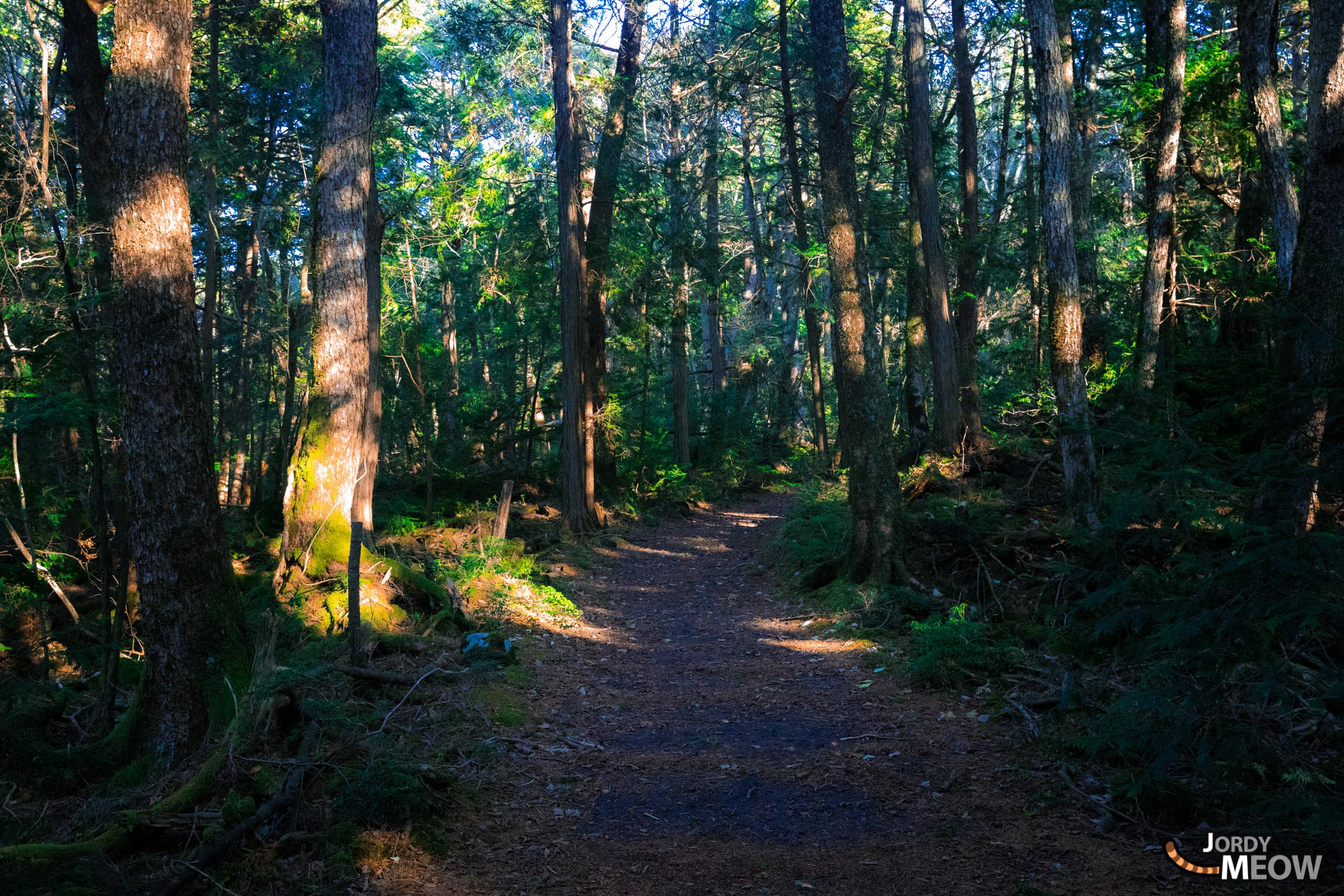 chubu, forest, japan, japanese, jukai, natural, nature, yamanashi