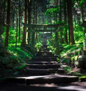 forest, natural, nature, religion, religious, shinto, shrine, spiritual, thing, tori