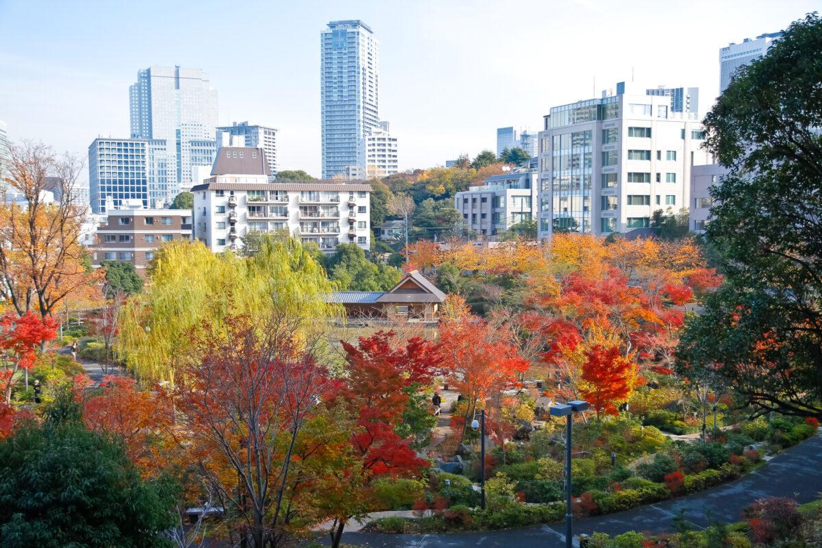 Autumn Leaves - Midtown Park
