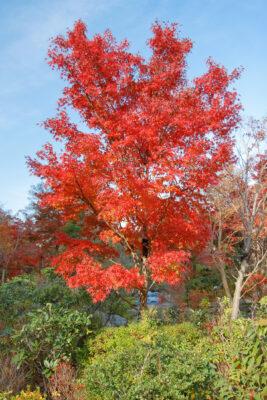 autumn, japan, japanese, kanto, minato, minato-ku, natural, nature, roppongi, tokyo