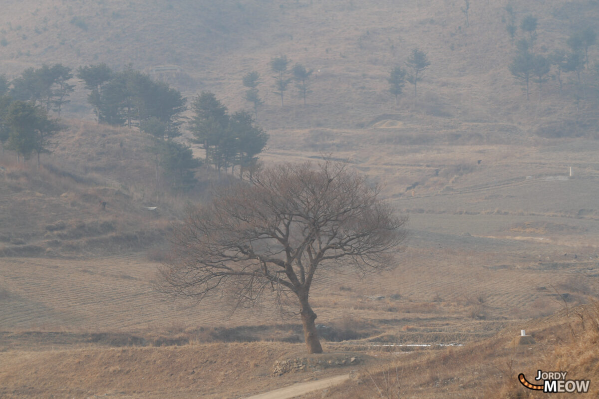 Tree of Life in North Korea
