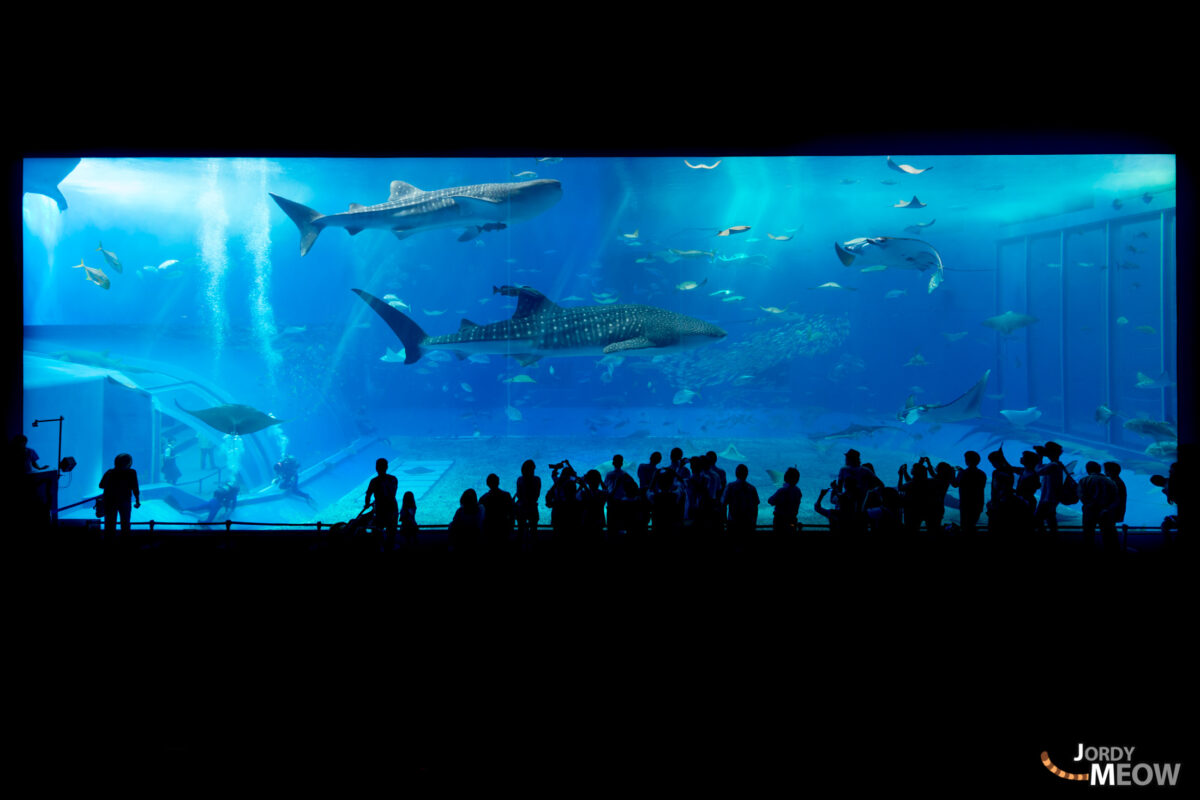 Okinawa Churaumi Aquarium