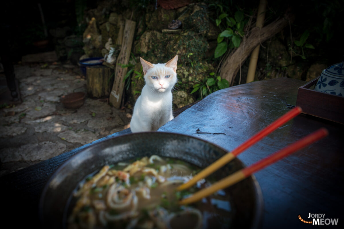 This Cat Likes Soba