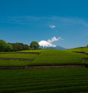 chubu, fields, japan, japanese, mount-fuji, natural, nature, shizuoka, spring