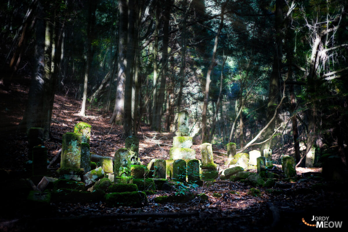 asia, cemetery, chiba, forest, japan, japanese, kanto, natural, nature, people