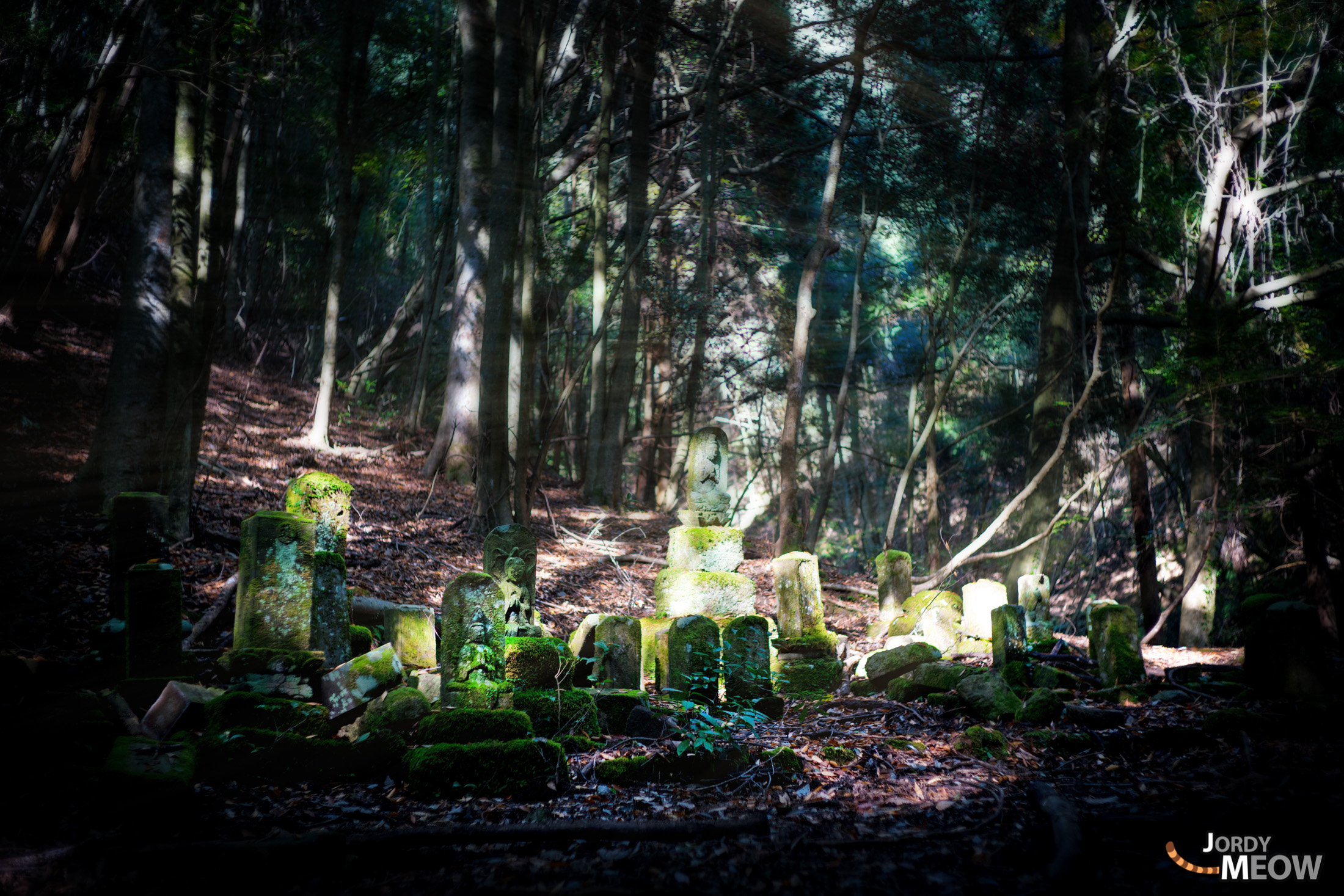 asia, cemetery, chiba, forest, japan, japanese, kanto, natural, nature
