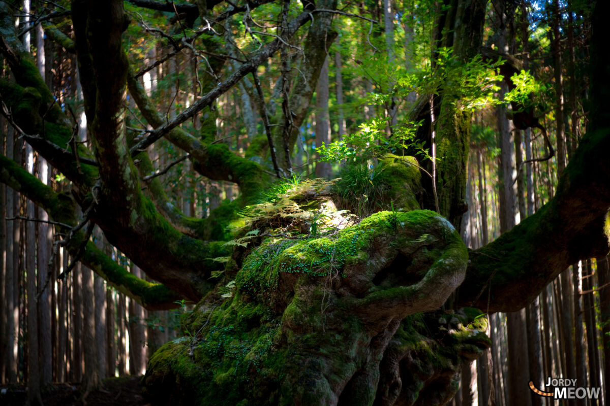 asia, chiba, forest, japan, japanese, kanto, natural, nature, tree