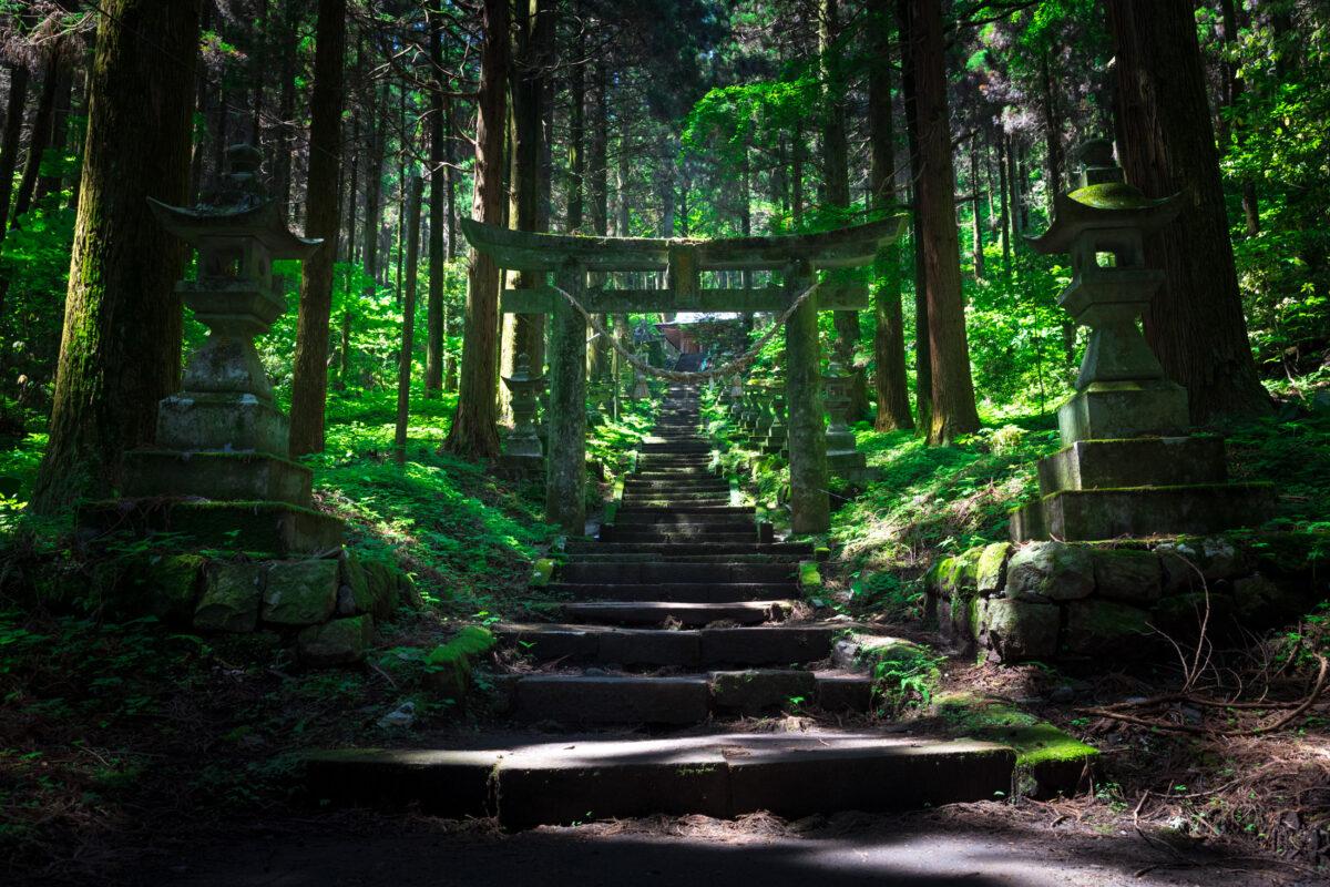 forest, natural, nature, point-of-interest, religion, religious, shinto, shrine, spiritual, tori