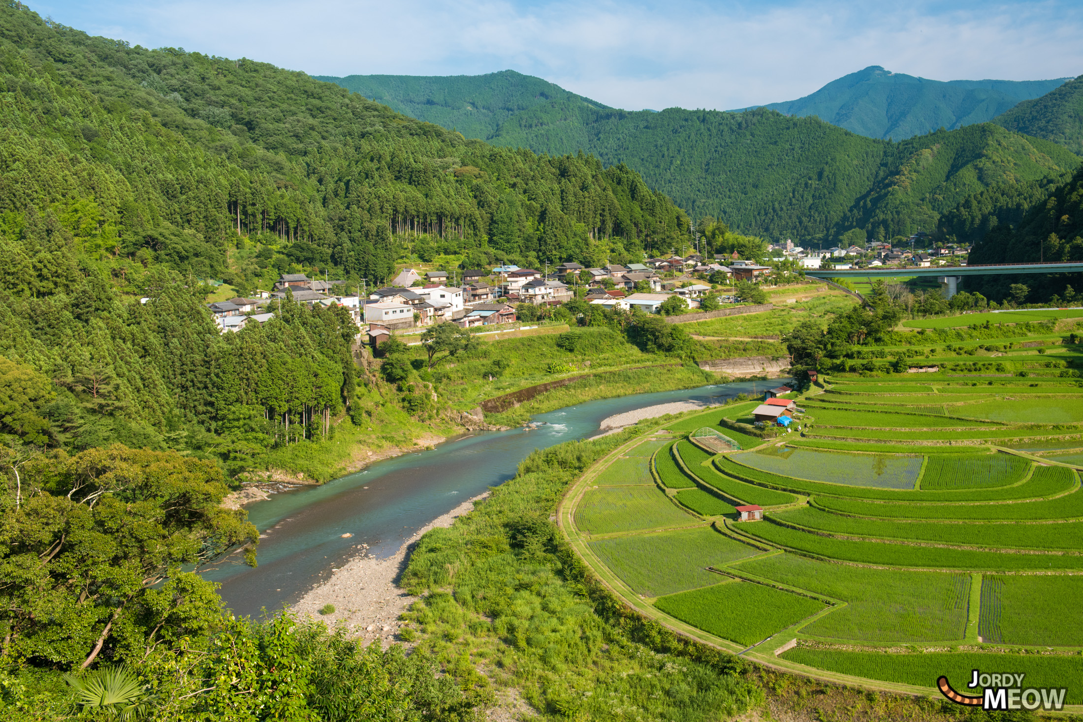 drink, food, japan, japanese, kansai, natural, nature, rice, ricefield, wakayama