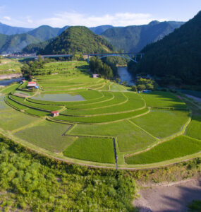 drink, drone, food, japan, japanese, kansai, natural, nature, rice, ricefield, special, thing, wakayama