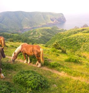 animal, chugoku, horse, island, japan, japanese, natural, nature, shimane